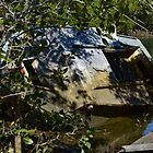 Boat wreck in the mangroves of Lota Creek. Queensland by hanspeder