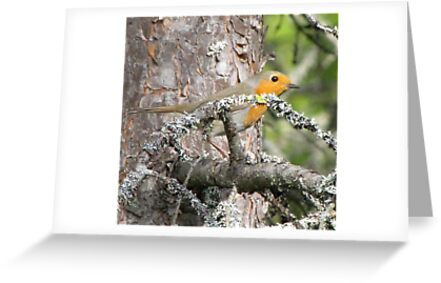 Robin in the wood by PVagberg