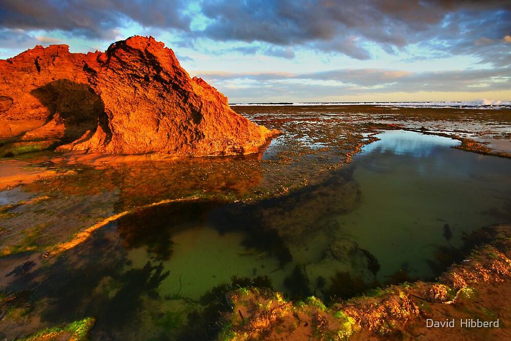 The Rock Pool by David  Hibberd