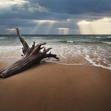 Beachin with Driftwood on a beach at sundown by LESLIEDYESIGN