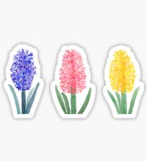colorful hyacinth Sticker