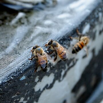 Bees take a drink from A Gardener's Notebook by douglasewelch