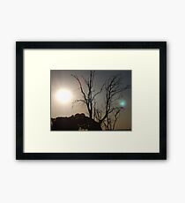 Dead Tree #1 Framed Print