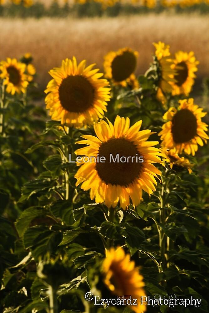 Sunflowers by Leonie Morris