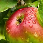 Apple on the tree - with raindrops by Agnes McGuinness