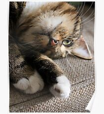 Upside Down Cat Poster