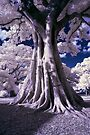 Tree by Andrew Dickman