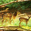 Woodland beauty by Alan Mattison