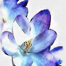 Watercolor Crocus by DDLeach