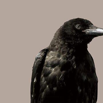 Raven  by michaelroman