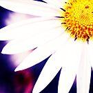 Flowers in the Garden by DDLeach