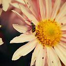 Itsy, bitsy, teenie, weenie, yellow polka-dot bug.... by DDLeach
