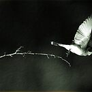 Leap Of Uncertainty by DigitallyStill