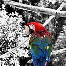 Who's a pretty bird? by DDLeach