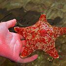 starfish by Coloursofnature