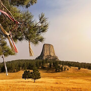 Prayer Cloths on the Trees at Devils Tower National Monument by alex4444