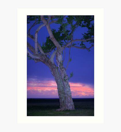 *The Twilight Tree* Art Print