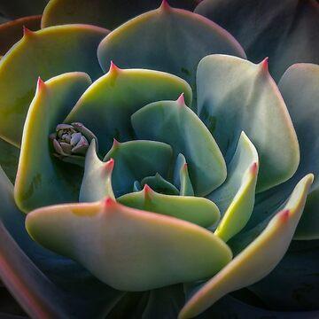 Succulent Flower by Clintpix