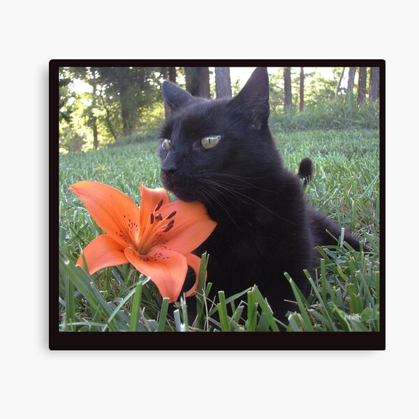 What up, tiger-lily-pussy-cat Canvas Print