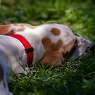 Let sleeping dogs lie by Dave  Knowles
