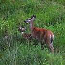 WHITETAIL DOE AND FAWN by kotybear