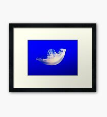Jelly fish in blue Framed Print