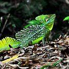 Jungle Dragon! (Green Basilisk) by MyFrogCroaked