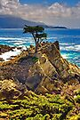 Monterey Lonely Tree by photosbyflood