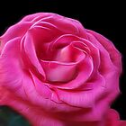 Satin Soft Pink  Rose by Vickie Emms