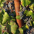 On the Vine by CherylBee