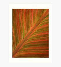 Natural Abstracts - Leaf Pattern Art Print