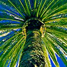 Date Palm at Night by Mark Boyle