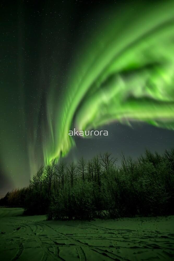 Aurora Borealis ~ Seahawk In Flight by akaurora