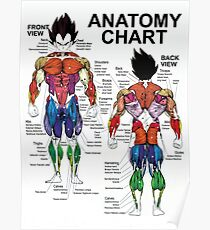 Anatomy Chart - Muscle Diagram - Exercise Science  Poster