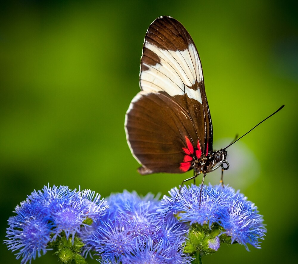 Butterfly on green background and the grass by Nelson Charette