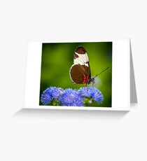 Butterfly on green background and the grass Greeting Card