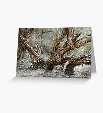 Swamp Paperbark Tree Greeting Card