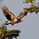 The Fledgling by David Friederich