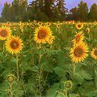 The Sunniest Field by Veikko  Suikkanen