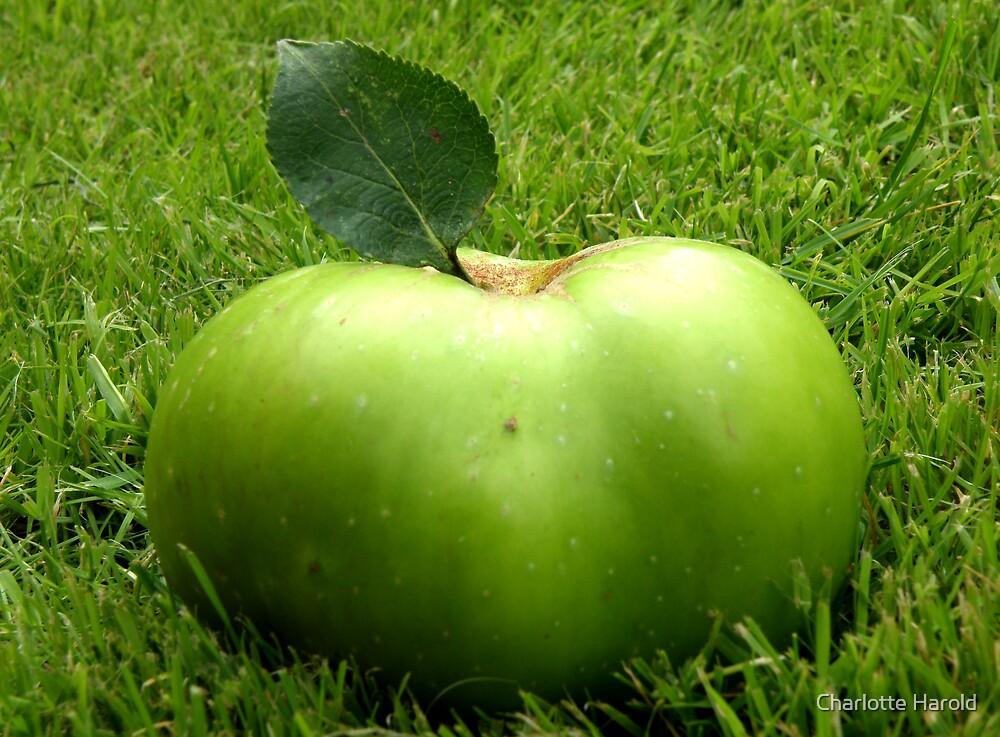 Grass Apple by Charlotte Harold