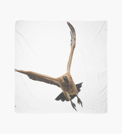 Cape (Griffon) Vulture - Gyps coprotheres Scarf