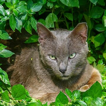 Alert cat hides in the bushes looking at camera by PhotoStock-Isra