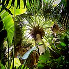 tropical canopy ... by SNAPPYDAVE