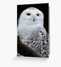 The White Hunter Greeting Card