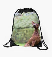 Outdoor portrait of a red miniature pinscher dog sitting on grass Drawstring Bag