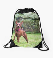 Outdoor portrait of a red miniature pinscher dog Drawstring Bag