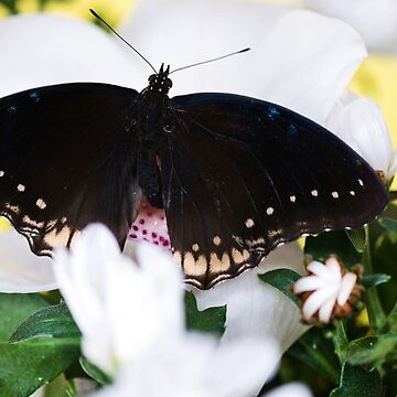 Tropical butterfly sitting on the white flower over by anytka