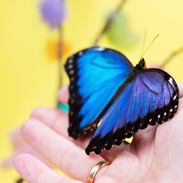 Morpho butterfly sitting on the human hand by anytka