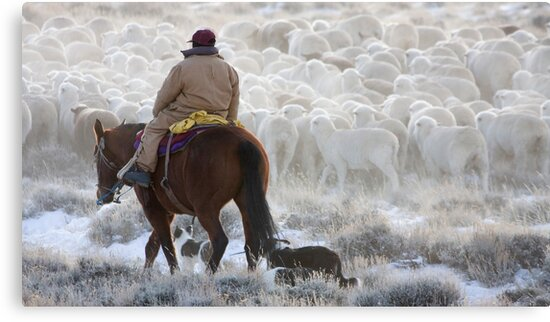 Sheep Herding, Red Desert, Wyoming by A.M. Ruttle