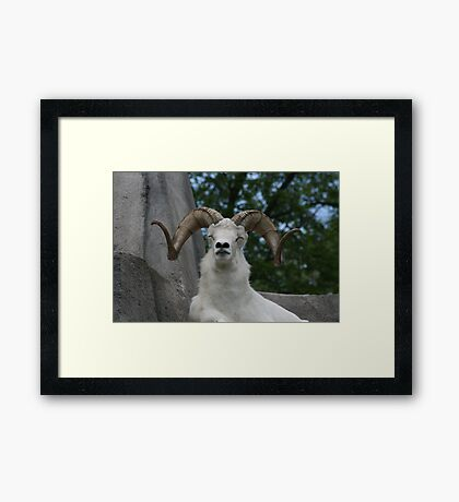 Sleeping Bill Framed Print